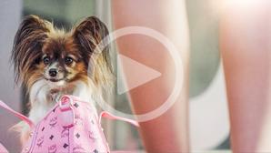 Natürlich Blond – Das Musical – Werbespot